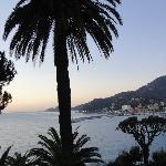 baie et palmier
