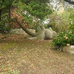 scultura a forma di cammello in giardino