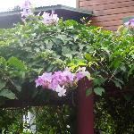 flowering vines by gazebo