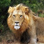 King - there is no mistaking who sits at the top of the food chain