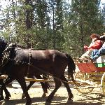 Take a buggy ride, nice people and horses
