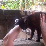 Nefatari pretty resident cat