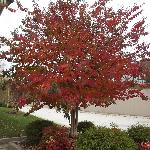 Fall colors at Days Inn