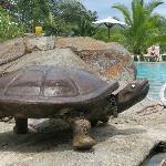 Turtles, turtles everywhere!