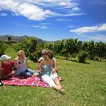 Vineyard picnic near to Edgewater - Lake Wanaka
