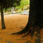 Pine needle covered ground