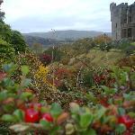 The Castle gounds