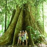 Big Tree over 1000years old