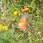 a colorful butterfly