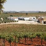 Bodegas Real - viñedos