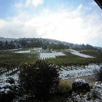 vineyards at bck of hotel