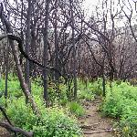 Devastated Forests