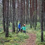 Kemeri forest