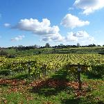 Views of Vineyard