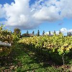 Lovely stroll through the vineyard