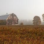 Upper Peninsula Foggy Morning