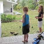 Feeding the birds outside the chalet door
