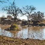 View from restaurant: elephants drinking at the nearby pond