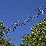 Ponts de singes, pour braver le vertige