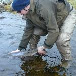 returning salmon on schoolhouse loch