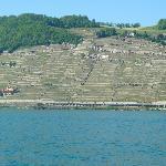 Vinyards of the Swiss Riviera
