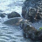 Green Back Turtle on Beach
