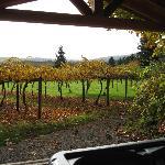 Autumn view of the Kiwi Vineyard from the Gazebo.