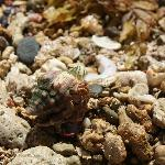 A hermit crab found on the beach