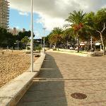 Palm Nova