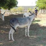 Donkeys at ACE