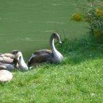 Tierpark, Munich, Baviera, Alemania.