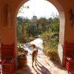 Back patio + dog sentry
