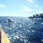 Ocean Explorer