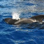 Ocean Explorer Foto