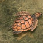Save the turtles of Sri Lanka