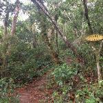 Jungle Lodge Foto