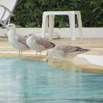 Seagulls enjoying the swimming pool