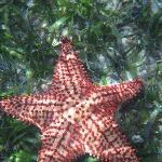 starfish out at the monkey island trip