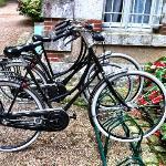 VanGogh bikes to use....