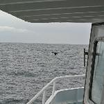 walvis op 11 uur