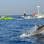 Dolphin Watching at Lovina Beach in THE LOVINA bali