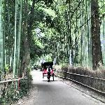 rickshaw in the bamboo forest