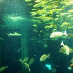 Joetsu Municipal Aquarium
