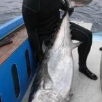 Thomas's 47kg dogtooth tuna