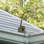 monkey around hotel
