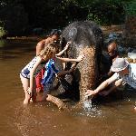 Activity in an Around Mannas Veedu