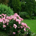 Some of Delia's exquisite roses