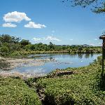 The hippo pool at Keekorok