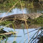 Crocodile in Tsavo West