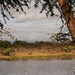View from Tent in Tsavo West